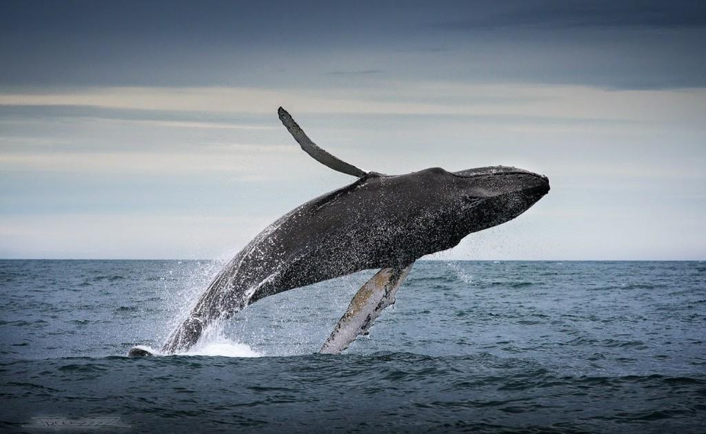 Горбатый кит омниканальности — Блог LiveTex